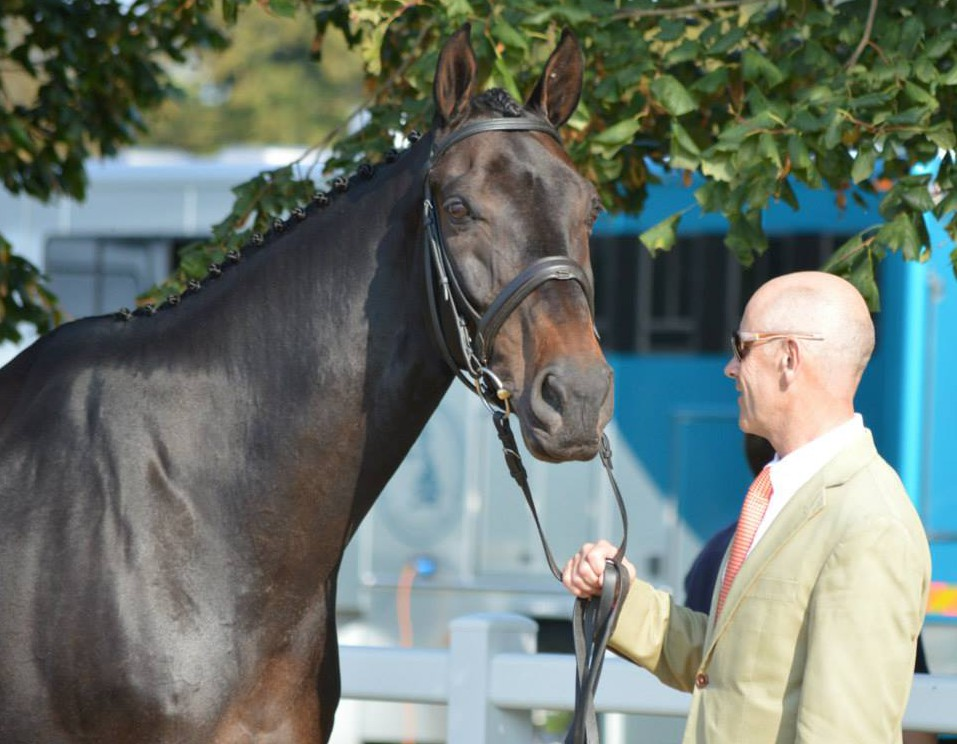Andrew Hoy And Cheeky Calimbo At The First Horse Inspection Photo Courtesy Of PRO