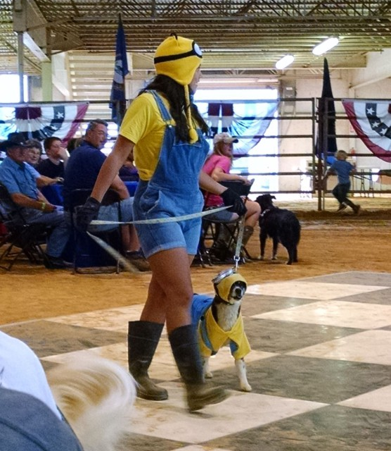 This not-so-despicable duo, who won the Dog/Owner Lookalike Contest at the Weatherbeeta Dog Show. Photo by Lindsey Kahn