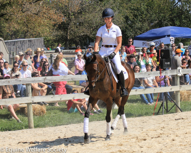 Polly showing off in front of the crowd. Photo courtesy of Equine Welfare Society.