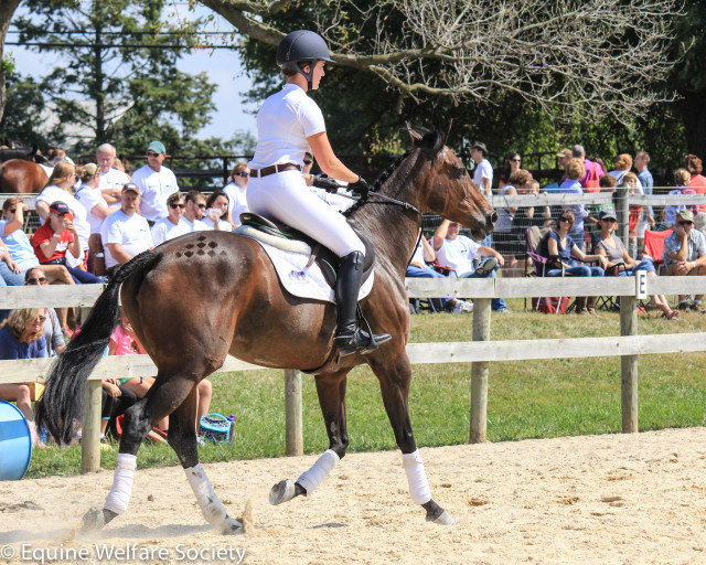 Sporting some amazing turnout, and no bridle! Photo courtesy of Equine Welfare Society.