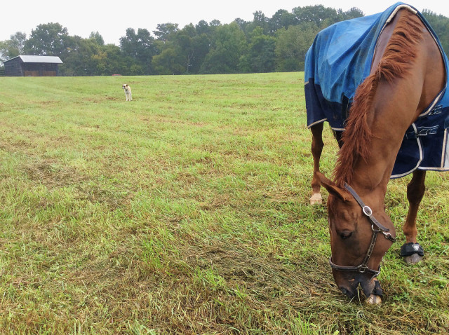 Manoir de Carneville on the first full day of his vacation at The Fork. Photo courtesy of Meg Kep.