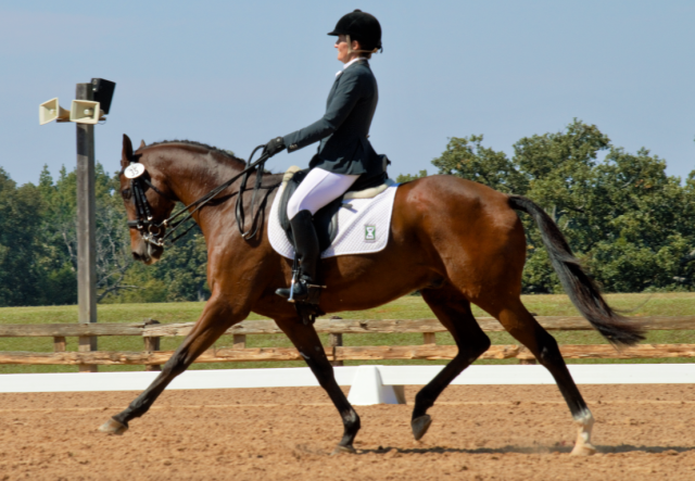 Jenn O'Neill and That'll Do II in the Merial Intermediate dressage yesterday. Photo by Sally Spickard.