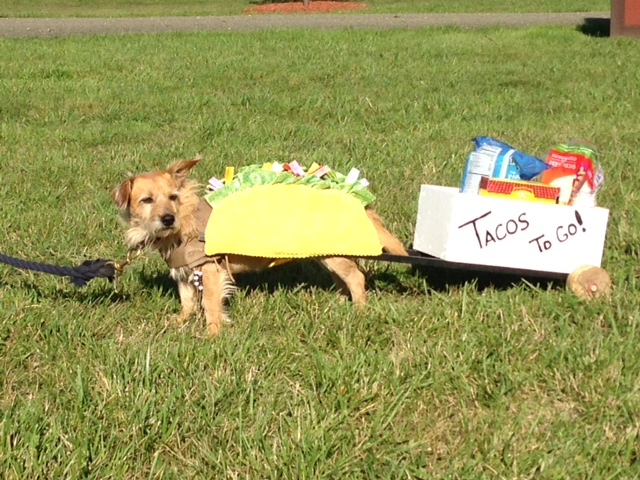 Chris Heydon's dog Boomer, finding his true calling as a taco dog. Photo by Sue Goepfert