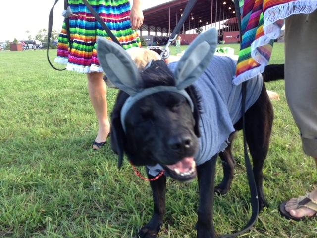 Jen Rogness' dog - I mean, donkey - Bear is such a good sport! Photo by Sue Goepfert