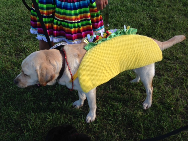 Jen Rogness' dog Boomer is clearly ecstatic about being a taco for the day. Photo by Sue Goepfert