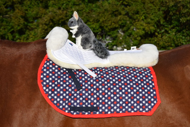 The Mattes Gold Collection Correction Half Pad looked so plush, that Chinch felt the need to jump in on the product testing... Photo by: Lorraine Peachey