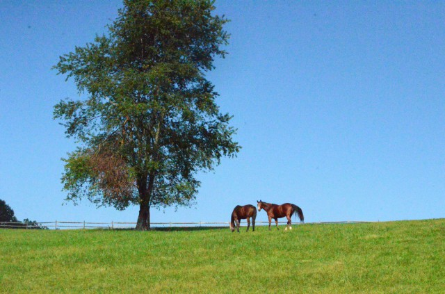 We stand in support of Newlin Township horse farms! Photo courtesy of Lisa Thomas.