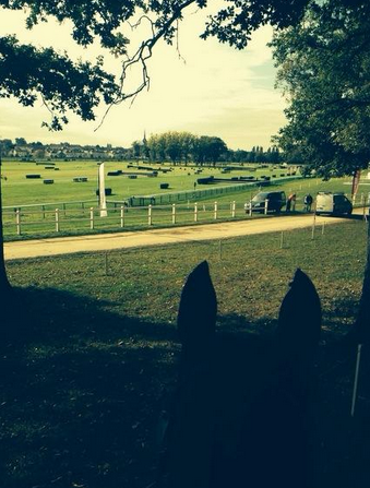 Between the ears of Cooley Ground Control at Mondial du Lion. Photo via Liz Halliday-Sharp on Twitter.