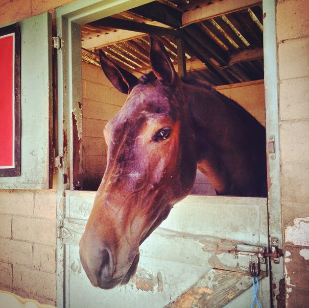 Handsome Scotty loves the camera. Photo via EN's Instragram.