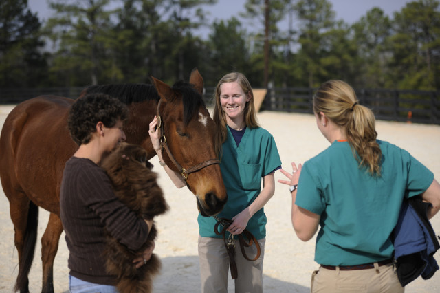 Finding a vet you can trust is critically important as a horse owner. Photo via Wikimedia Commons.