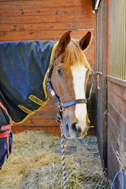 Mr. Medicott at True Prospect Farm. Photo by Jenni Autry.