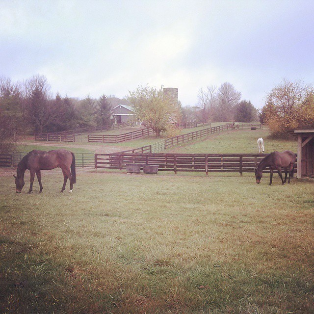 Roman Place and Oz the Tin Man settled in at Redtail Ridge Farm. Photo via Katy Groesbeck on Facebook.