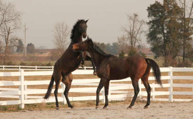 CANTER PA alums Thundershock and Nkosi Reigns enjoying some down time. Photo courtesy of CANTER PA.