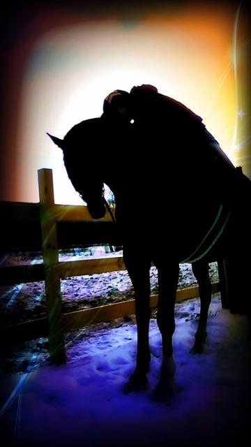 My favorite furry pony.