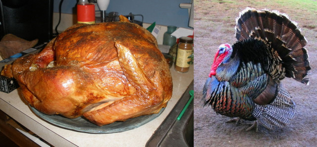 Here's your inspiration! Your turkey can be modeled after either one.
