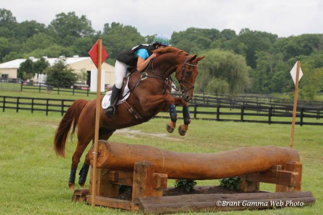 Leo learning to jump properly! Novice at Surefire. Photo courtesy of Brant Gamma Photography.