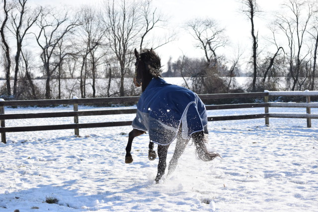 I also really like the Full Wrap Tail Flap of the blanket, because I feel like it offers a little extra protection for a horse standing out in the wind - Photo by Lorraine Peachey