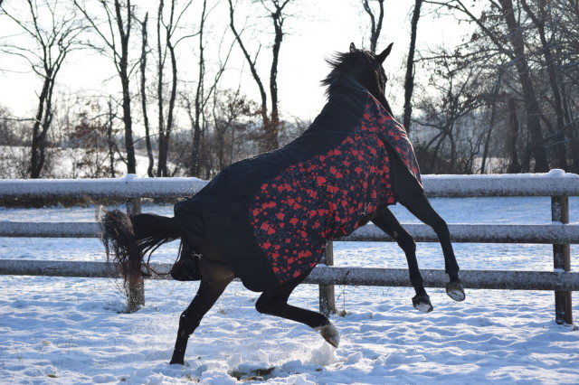 Roo hops up from a roll and flails. And then runs some more. The best part? Through all of those crazy antics, I'm happy to report that the blanket stays right in place! Photo by: Lorraine Peachey
