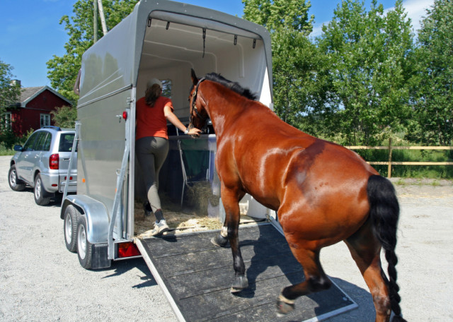 Before bringing home a new horse, you'll probably want to phone your vet to schedule a pre-purchase exam first - which will allow you to better understand any physical limitations that your future partner may have - Photo from www.southernstates.com