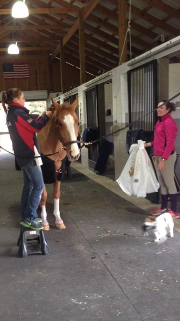 Czechmate getting beautified for the weekend. Photo via Lauren Kieffer Eventing on Facebook.