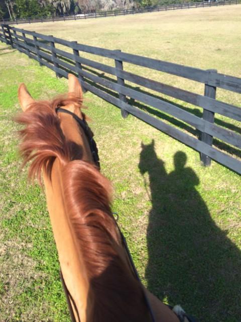 Jennie Brannigan and Nina Gardner's Twighlightslastgleam enjoy a hack in Florida. Photo via Jennie on Facebook.