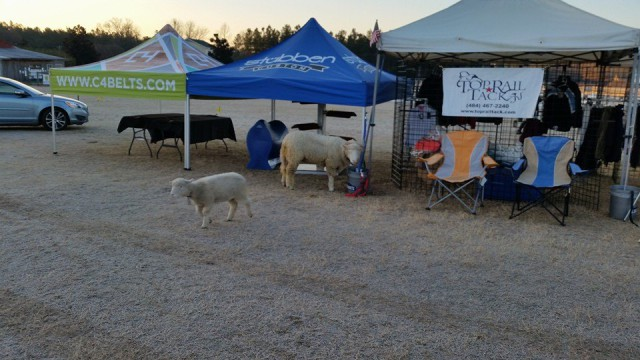 There are sheep in Paradise! Cloudy and Stormy make sure everything is in order at the trade fair on this chilly Saturday morning. Photo via Lellie Ward's Facebook