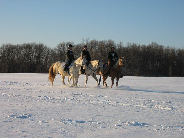 Too cold to ride? Not for these brave riders in Area 4! Photo courtesy of Woodloch Stable.