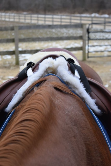 The Wither Freedom Technology also functions nicely underneath my saddle - when I put my hand under the front of the pad after it was in place under my saddle, I felt no pressure or tension across the wither area - Photo by Lorraine Peachey