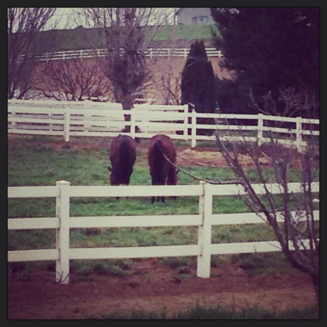 Even OTTBs can be convinced to take it easy on grey wintery days.  From the Dragonfire Farm Facebook page.
