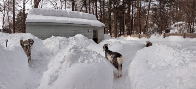 Snow photo courtesy of EN reader Abby Powell, who is also weathering this crazy Boston winter.