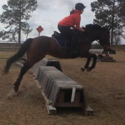 Schramm equestrian