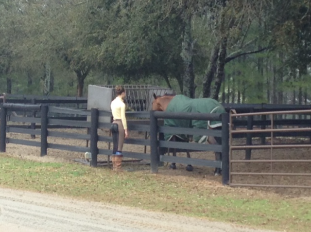 Even the horses enjoy the food in Aiken!