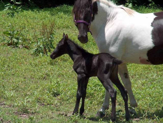 Baby Spirit and her mom. Photo courtesy of Priscilla Calvird