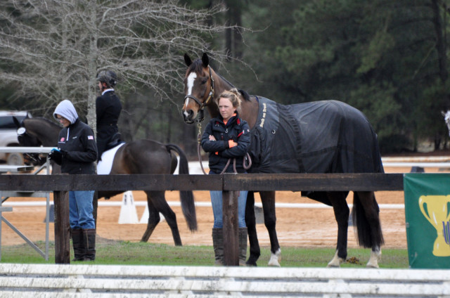 Jimmie Schramm and Bellamy intently focused on husband Dom and stablemate Cold Harbor performing in the dressage ring. Photo by Leslie Threlkeld