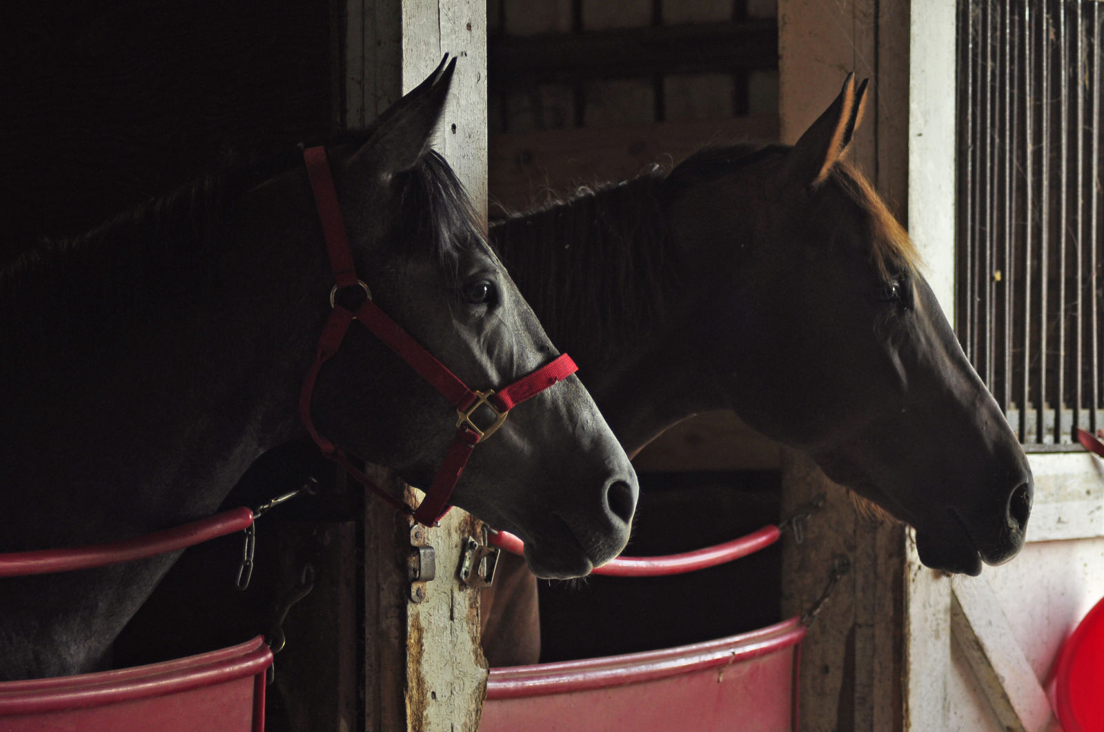 Two-year-olds in race training. Photo by Leslie Threlkeld.