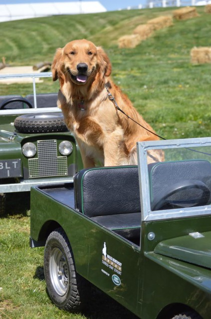 2015 Top Dog Lincoln in his Land Rover (Land Rover not included in prize).
