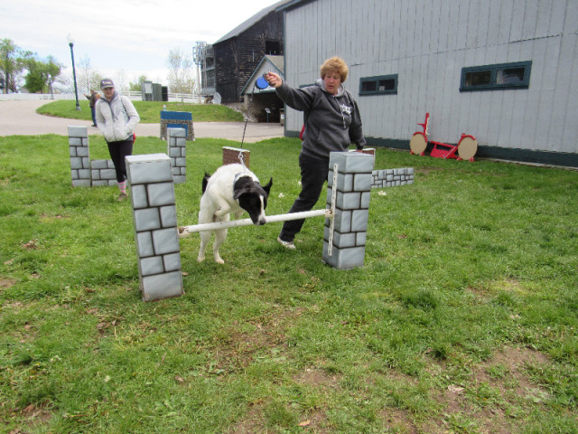 Jessica Pershing's Hewie wanted to display his excellent bascule over some fences.