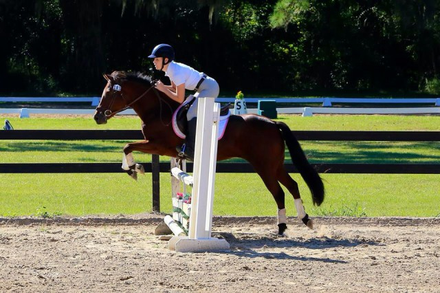 Becca and Cajun make short work of the stadium jumps. Photo courtesy of Becca Willner.