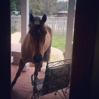 Yes, that is a pony on the porch. Photo by Becca Willner.