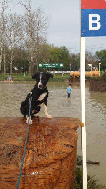 Kaylen Moon's Tucker ponders his options at Head of the Lake.