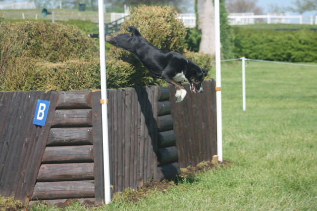 Stephanie Sills' Aiken stray smiles almost as big as Libby Head as he clears the corner.
