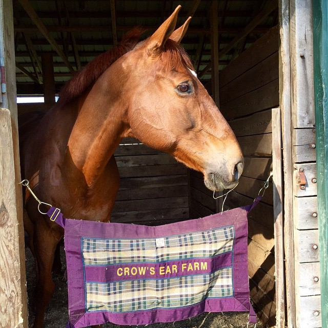 The Alchemyst surveys his new home in Virginia. Photo via Lauren Sherrill on Facebook.