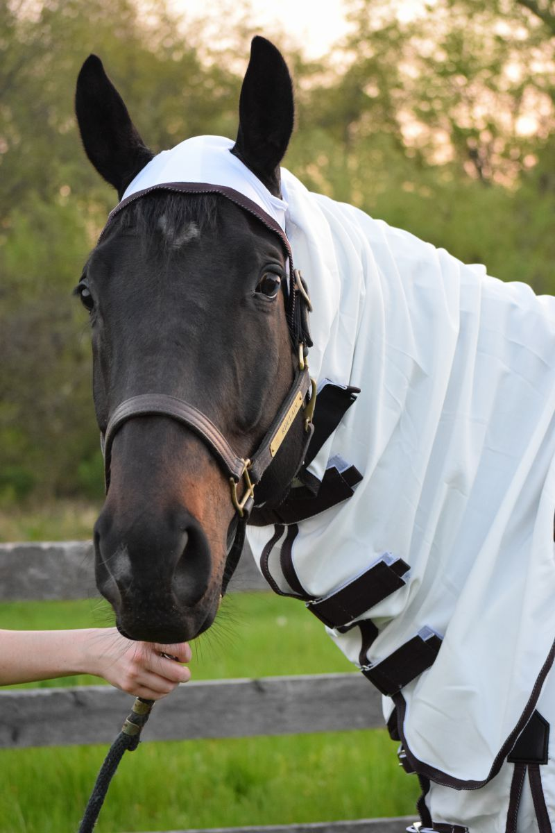 Equestrian Sweet-Itch Combo Fly Sheet
