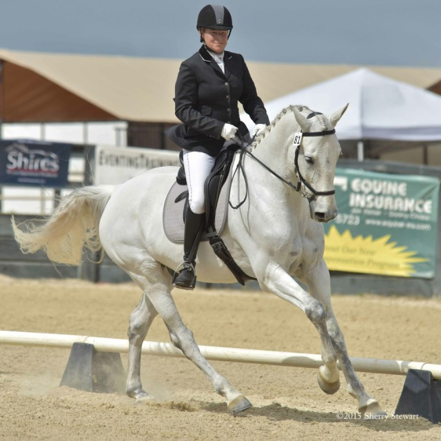 Ruth Bley and her own Silver Sage in the Preliminary Rider Challenge at Woodside Horse Park. Photo Courtesy Sherry Stewart.