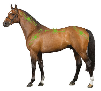 Sportz-Vibe treatment areas. Illustration via Horseware Ireland.