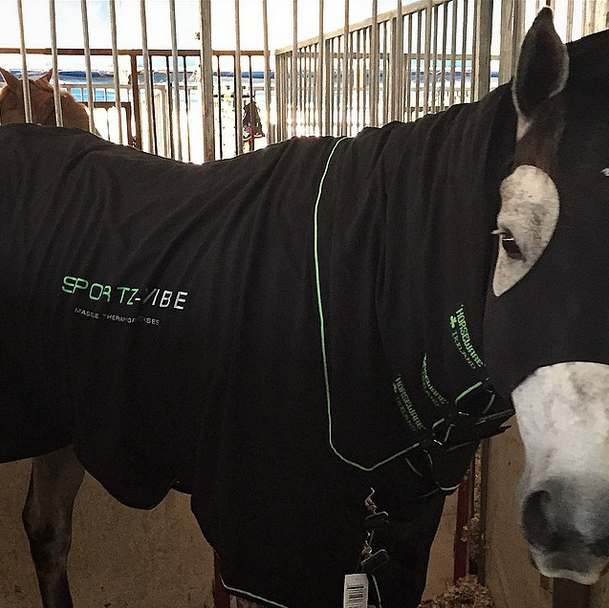 Doug Payne uses Sportz-Vibe! Here's Minnow modeling the blanket at MCTA. Photo via Instagram.