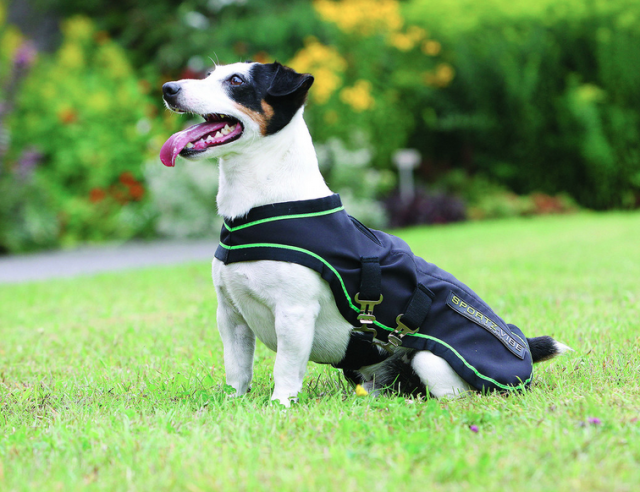 Did I mention Sportz-Vibe is also available for dogs? Photo via Horseware Ireland.