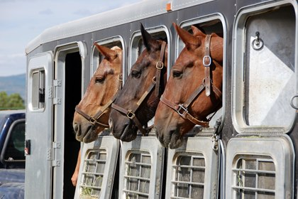 How well do you know your horse trailer? Photo from TheHorse.com and Photos.com