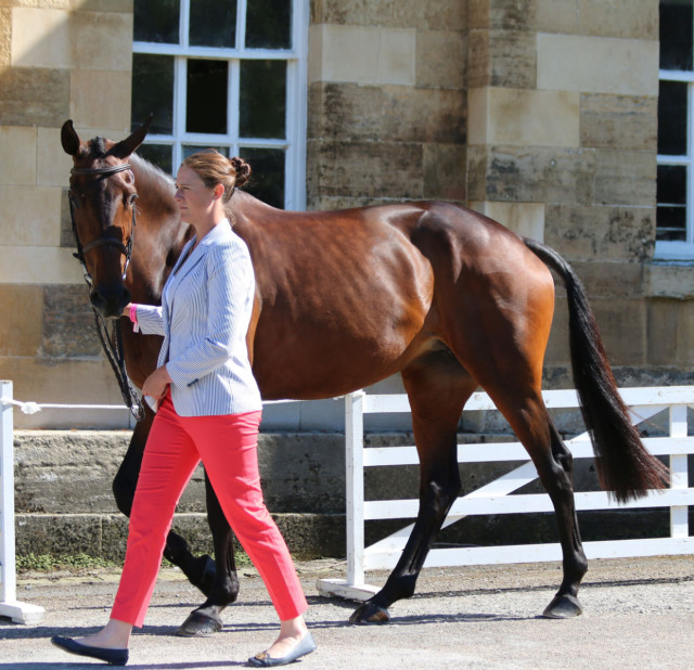 Lauren Kieffer and Veronica at Equitrek Bramham CCI3* First Horse Inspection Photo by Samantha Clark