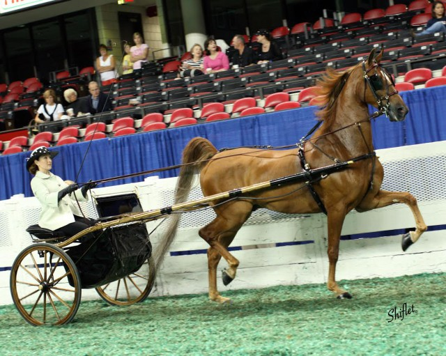 Karen and Will competing at the 2008 World's Championship Horse Show, Louisville, KY — Country Pleasure Driving division. Photo courtesy of Doug Shiflet.